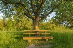 Parkera bänken under äppleträd Arkivfoto