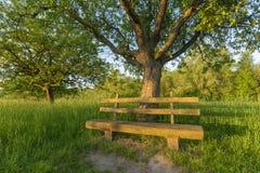 Parkera bänken under äppleträd Royaltyfri Bild