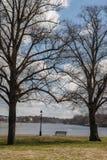 Parkera bänken under träd Royaltyfri Bild