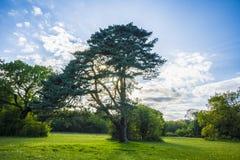 Parkera banan längs träd i sommar Arkivfoto