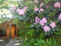 Parkera blommor Arkivfoto