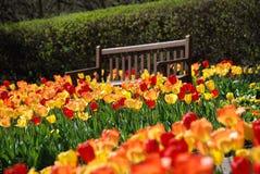 Parkera bänken bland röda och gula tulpan Arkivbild