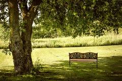 Parkera bänken under träd Fotografering för Bildbyråer