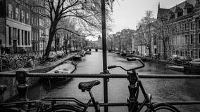 Parkera cykeln med Nutural en sjösikt royaltyfri foto