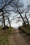 Parkera den södra Llano för slingan delstatsparken, Texas Royaltyfri Fotografi