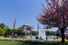 Parkera framme av Hagiaen Sophia på våren med att blomstra den plommonträd, folk och solen royaltyfri bild