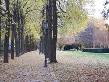 Parkera gatan med mycket trädsidor royaltyfri bild