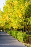 Parkera gränden, häcken och gröna orange träd Arkivfoto