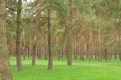 Parkera gräsmatta 4 Arkivbilder