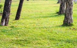 Parkera gräsmatta Arkivfoton