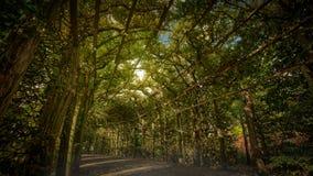 Parkera gräsplan Allee för den Sanssouci slottträdgården fotografering för bildbyråer