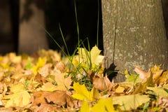 Parkera hösten Arkivbild