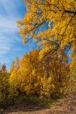 Parkera hösten Royaltyfria Bilder