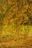 Parkera hösten Royaltyfri Bild