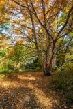 Parkera hösten Arkivfoton