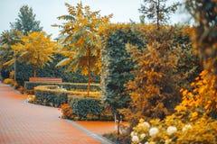 Parkera hösten för sommar för trädgårdträdbuskar arkivbild