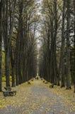 Parkera i hösten Arkivfoto
