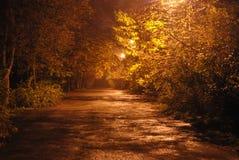 Parkera i natten Royaltyfri Fotografi