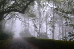 Parkera i Portugal Fotografering för Bildbyråer