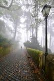 Parkera i Portugal Royaltyfri Fotografi