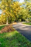 Parkera i Sunny Autumn Day With Golden Leaves i träd, Lettland, Europa, begrepp av att koppla av loppdag i fred och harmoni arkivbild