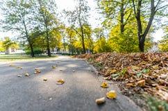 Parkera i Sunny Autumn Day With Golden Leaves i träd, Lettland, Europa, begrepp av att koppla av på loppdag i fred och harmoni arkivfoton