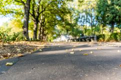 Parkera i Sunny Autumn Day With Golden Leaves i träd, Lettland, Europa, begrepp av att koppla av på loppdag i fred och harmoni arkivbild