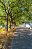 Parkera i Sunny Autumn Day With Golden Leaves i träd, Lettland, Europa, begrepp av att koppla av på loppdag i fred och harmoni arkivbilder
