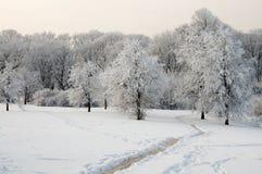 Parkera i vinter Royaltyfria Bilder