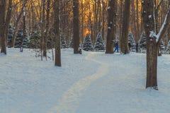 Parkera i vinter på solnedgången Fotografering för Bildbyråer