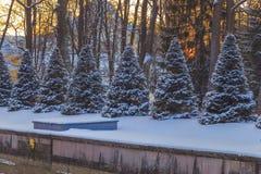 Parkera i vinter på solnedgången Royaltyfria Foton