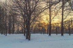 Parkera i vinter på solnedgången Royaltyfria Bilder