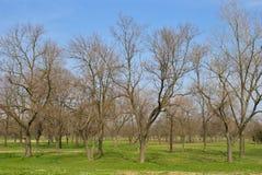 Parkera i vintern - träd med inga blad Royaltyfri Bild