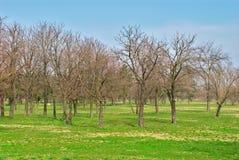 Parkera i vintern - träd med inga blad - den tidiga våren Arkivfoton