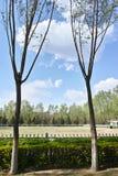 Parkera landskap Royaltyfri Fotografi