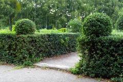 Parkera med buskar och göra grön gräsmattor, landskapdesign Topiary grön dekor i parkera Arkivfoton