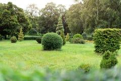Parkera med buskar och göra grön gräsmattor, landskapdesign Topiary grön dekor i parkera Royaltyfria Foton