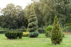 Parkera med buskar och göra grön gräsmattor, landskapdesign Topiary grön dekor i parkera Fotografering för Bildbyråer