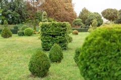 Parkera med buskar och göra grön gräsmattor, landskapdesign Topiary grön dekor i parkera Royaltyfria Bilder