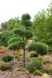 Parkera med buskar och göra grön gräsmattor, landskapdesign Topiary grön dekor i parkera Royaltyfri Fotografi