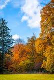 Parkera med färgrika träd i nedgången Royaltyfria Bilder