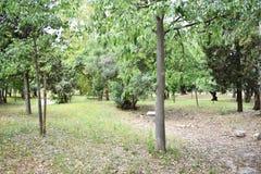 Parkera med gröna träd Arkivfoton