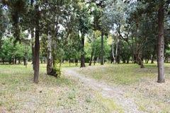Parkera med gröna träd Arkivbilder