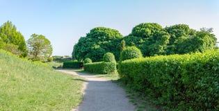 Parkera med gröna träd och buskar royaltyfri foto