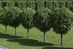 Parkera med härliga träd arkivfoton