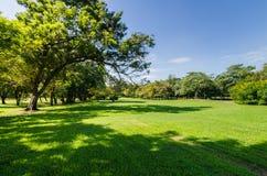 Parkera med skugga av det gröna trädet Arkivfoton