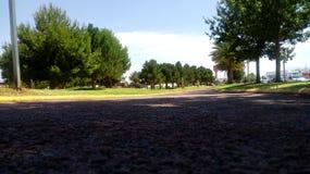 Parkera med träd Royaltyfri Bild