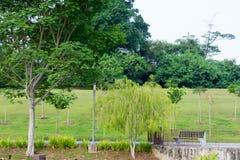 Parkera med träd och floden Royaltyfria Foton