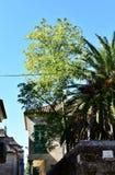 Parkera med träd och hus Blåttsky, solig dag Pontevedra gammal stad, Spanien arkivfoton
