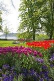 Parkera med tulpanblommor Royaltyfria Bilder